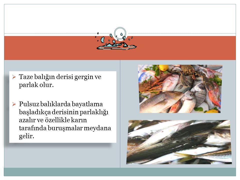Taze balığın derisi gergin ve parlak olur.