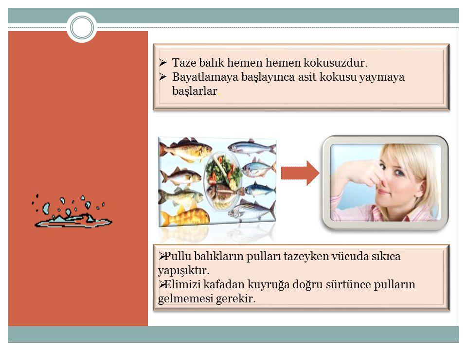 Taze balık hemen hemen kokusuzdur.