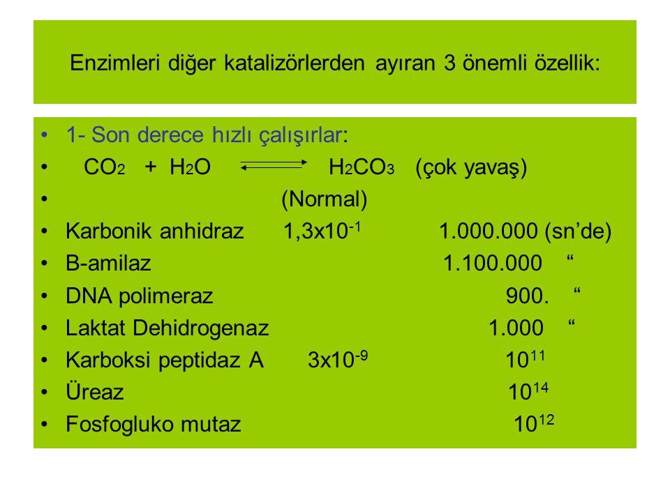 Enzimleri diğer katalizörlerden ayıran 3 önemli özellik: