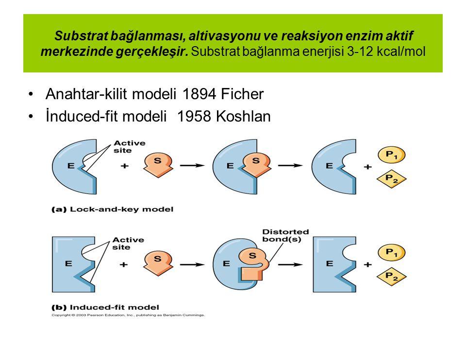 Anahtar-kilit modeli 1894 Ficher İnduced-fit modeli 1958 Koshlan