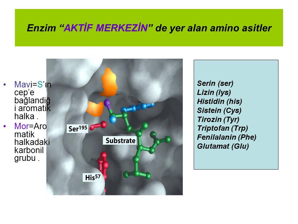 Enzim AKTİF MERKEZİN de yer alan amino asitler