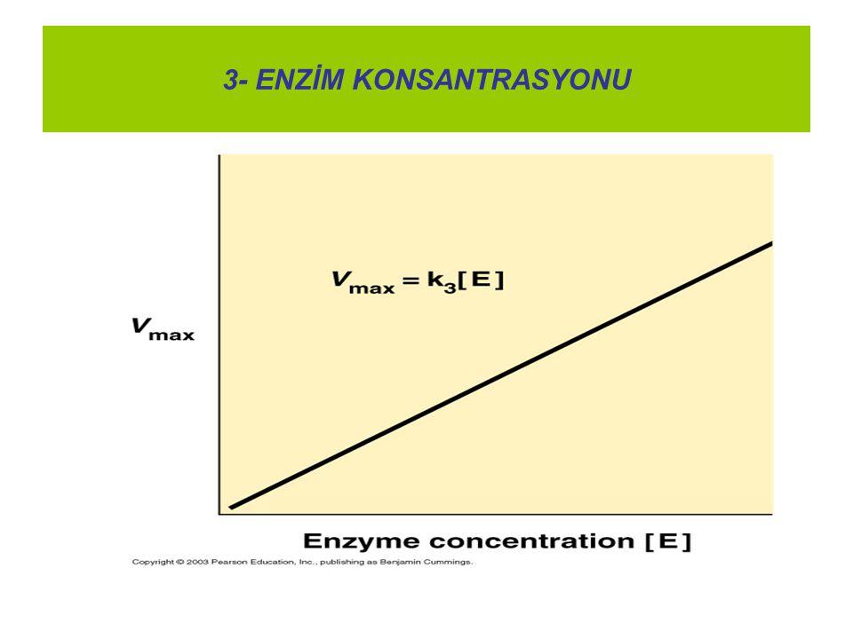 3- ENZİM KONSANTRASYONU
