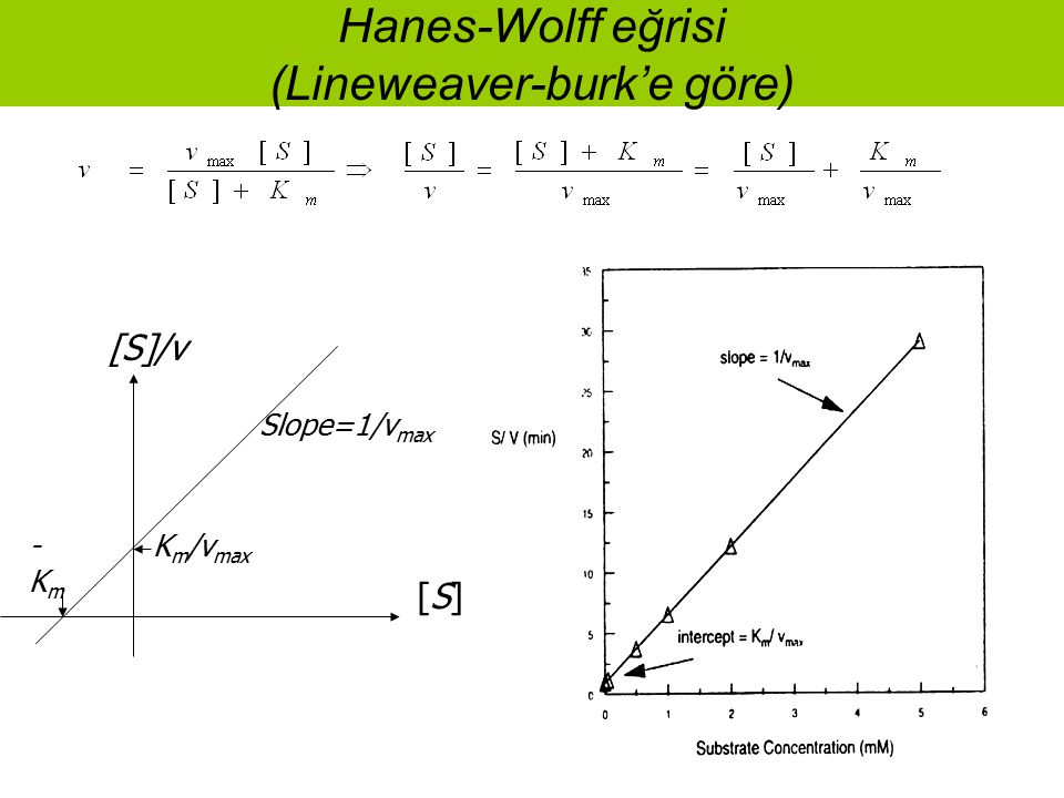 Hanes-Wolff eğrisi (Lineweaver-burk'e göre)