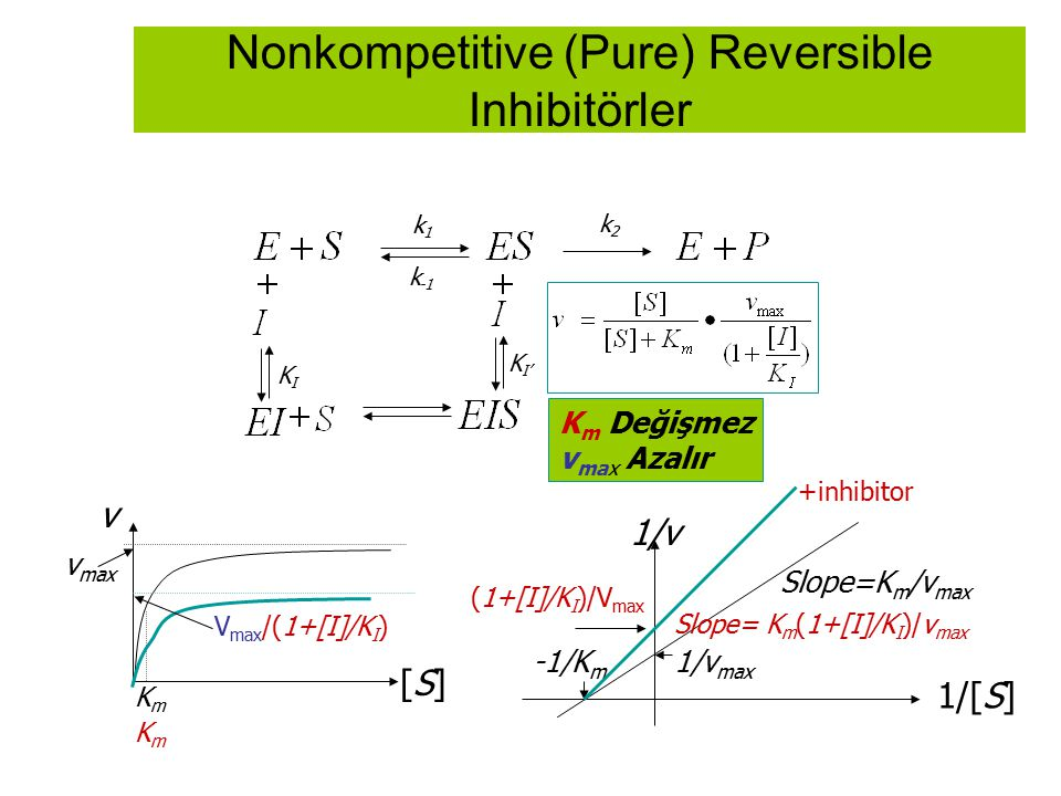 Nonkompetitive (Pure) Reversible Inhibitörler