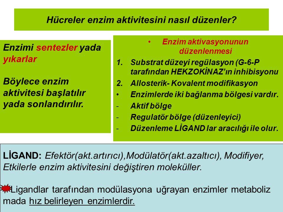 Hücreler enzim aktivitesini nasıl düzenler