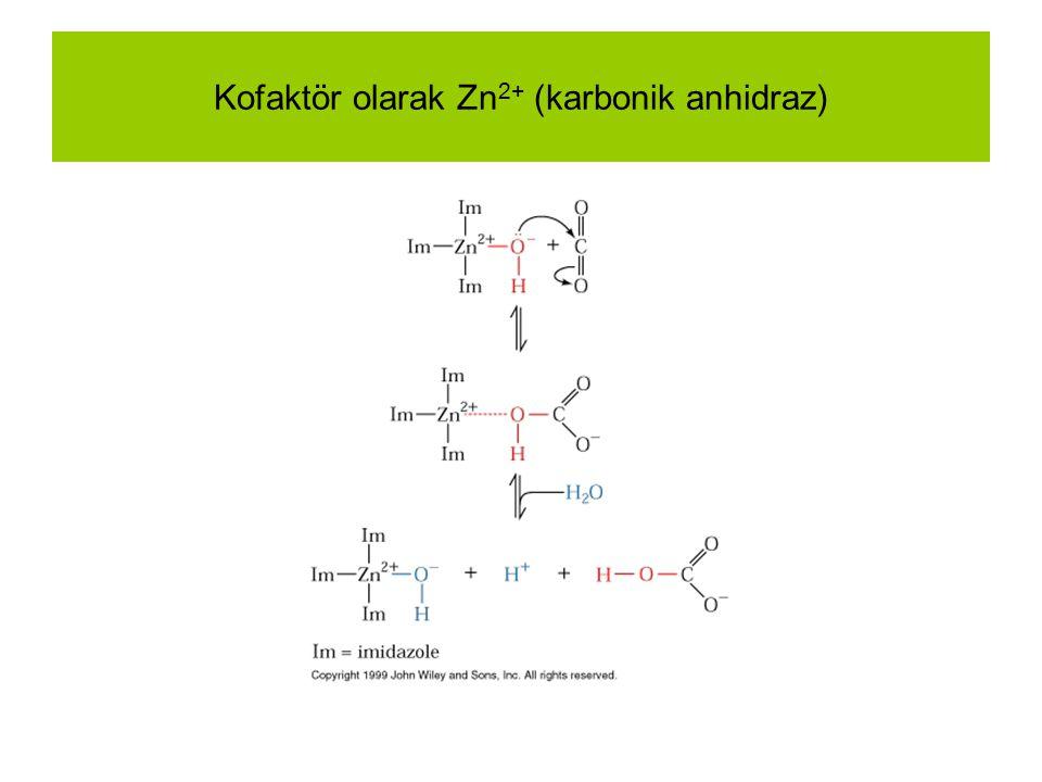 Kofaktör olarak Zn2+ (karbonik anhidraz)