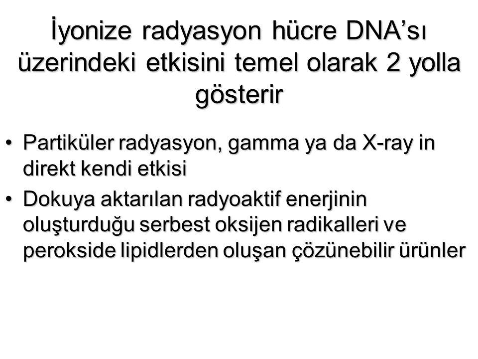 İyonize radyasyon hücre DNA'sı üzerindeki etkisini temel olarak 2 yolla gösterir