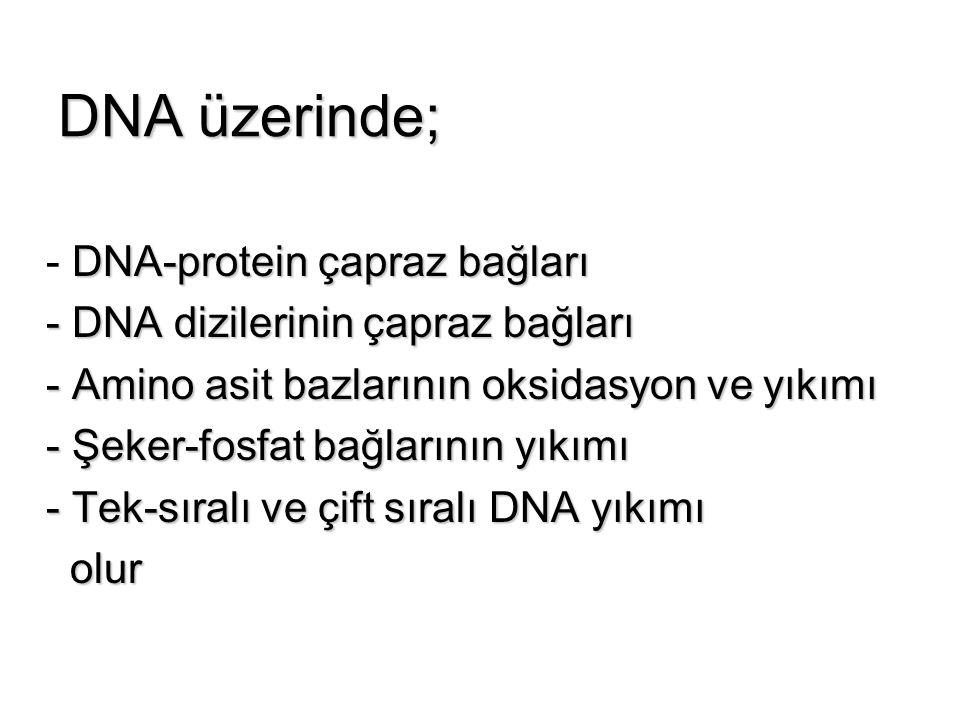 DNA üzerinde; - DNA-protein çapraz bağları