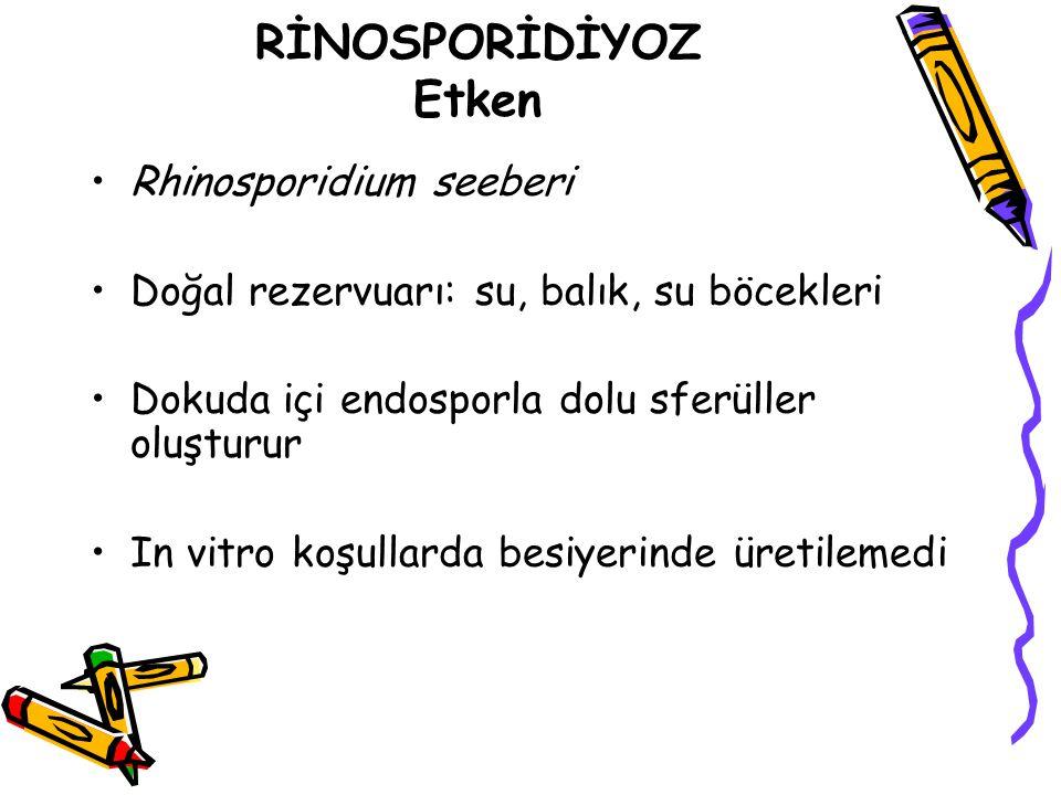 RİNOSPORİDİYOZ Etken Rhinosporidium seeberi