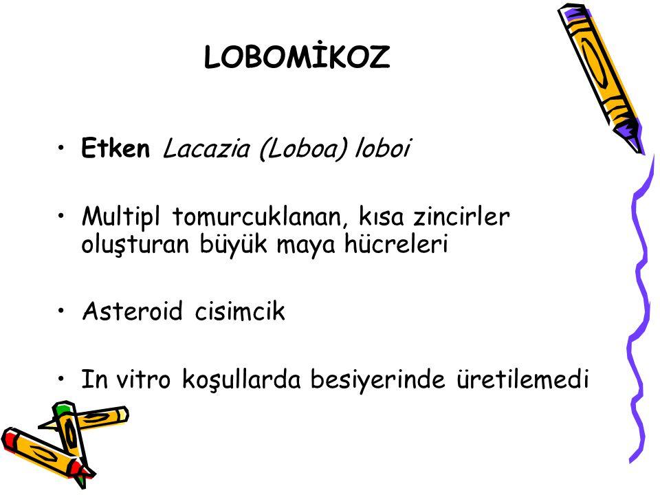 LOBOMİKOZ Etken Lacazia (Loboa) loboi