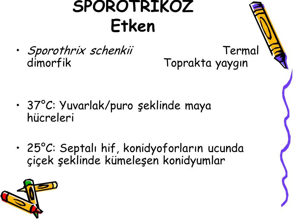 SPOROTRİKOZ Etken Sporothrix schenkii Termal dimorfik Toprakta yaygın