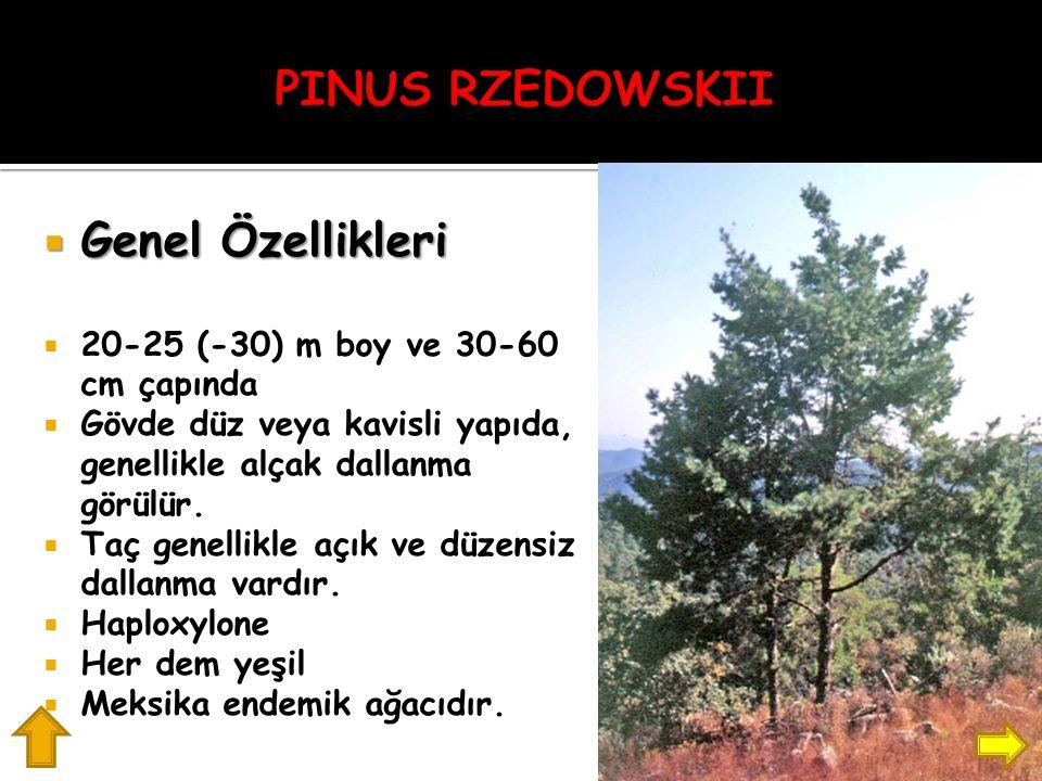 PINUS RZEDOWSKII Genel Özellikleri