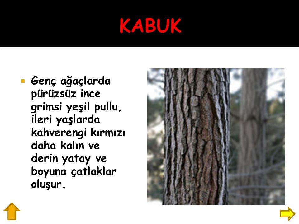KABUK Genç ağaçlarda pürüzsüz ince grimsi yeşil pullu, ileri yaşlarda kahverengi kırmızı daha kalın ve derin yatay ve boyuna çatlaklar oluşur.