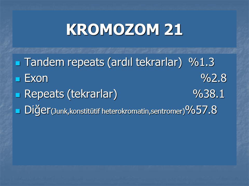 KROMOZOM 21 Tandem repeats (ardıl tekrarlar) %1.3 Exon %2.8