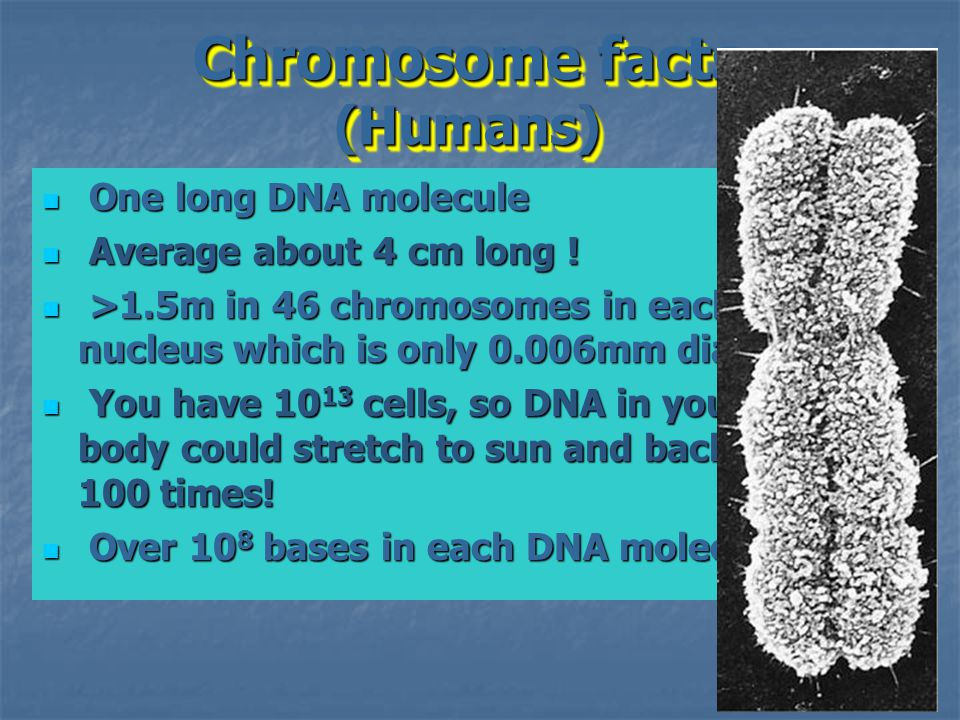 Chromosome facts (Humans)