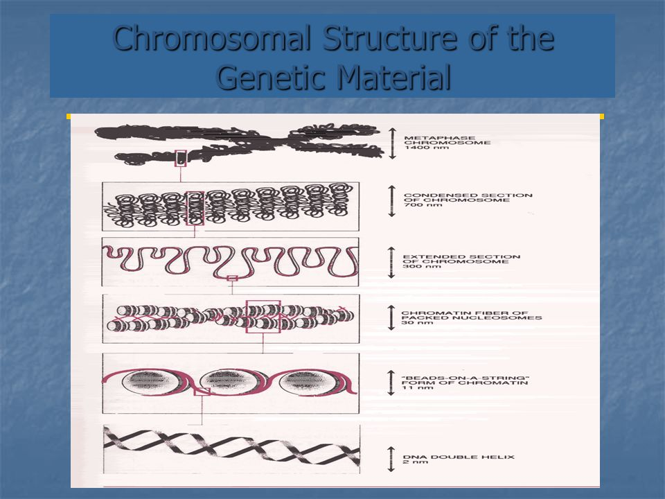 Chromosomal Structure of the Genetic Material