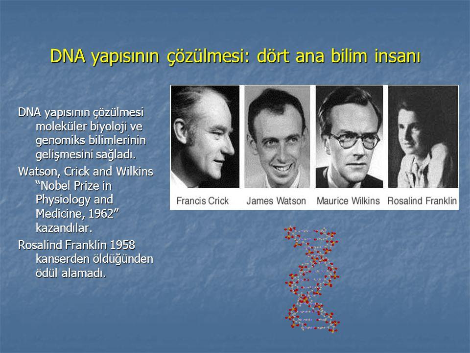 DNA yapısının çözülmesi: dört ana bilim insanı