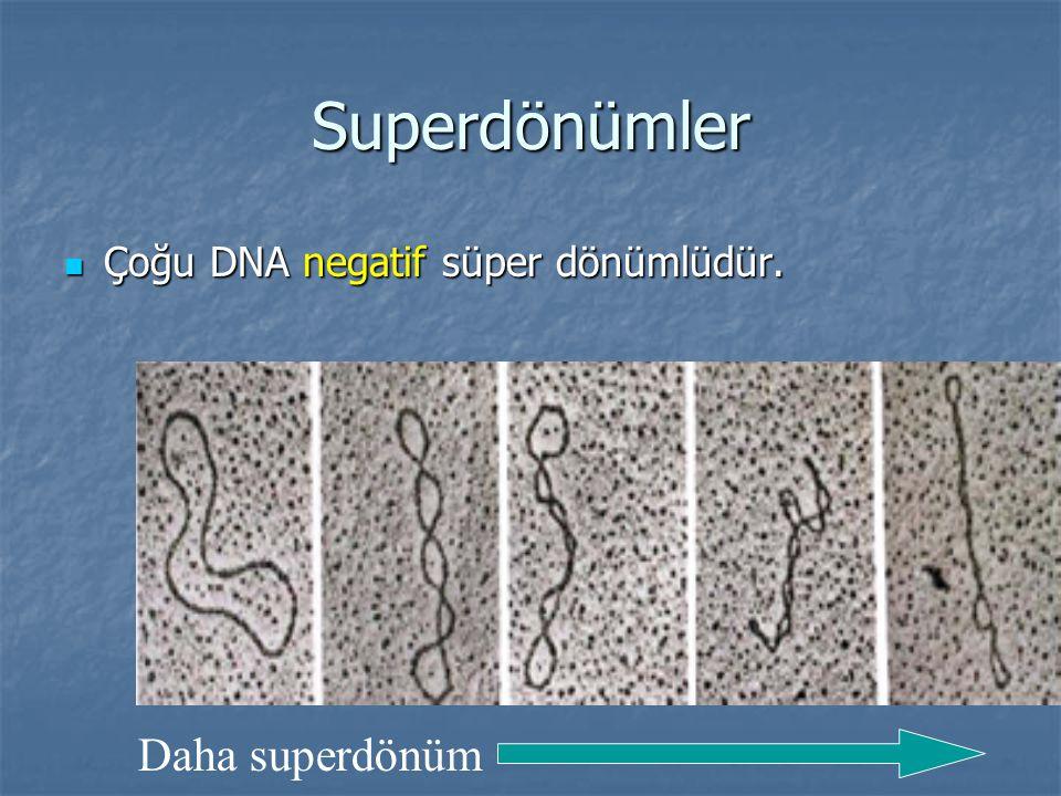 Superdönümler Çoğu DNA negatif süper dönümlüdür. Daha superdönüm