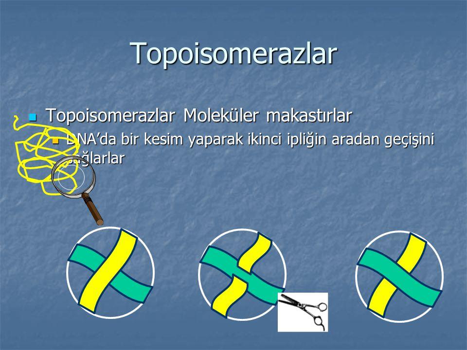 Topoisomerazlar Topoisomerazlar Moleküler makastırlar