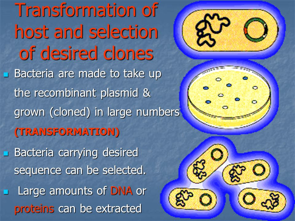 Transformation of host and selection of desired clones