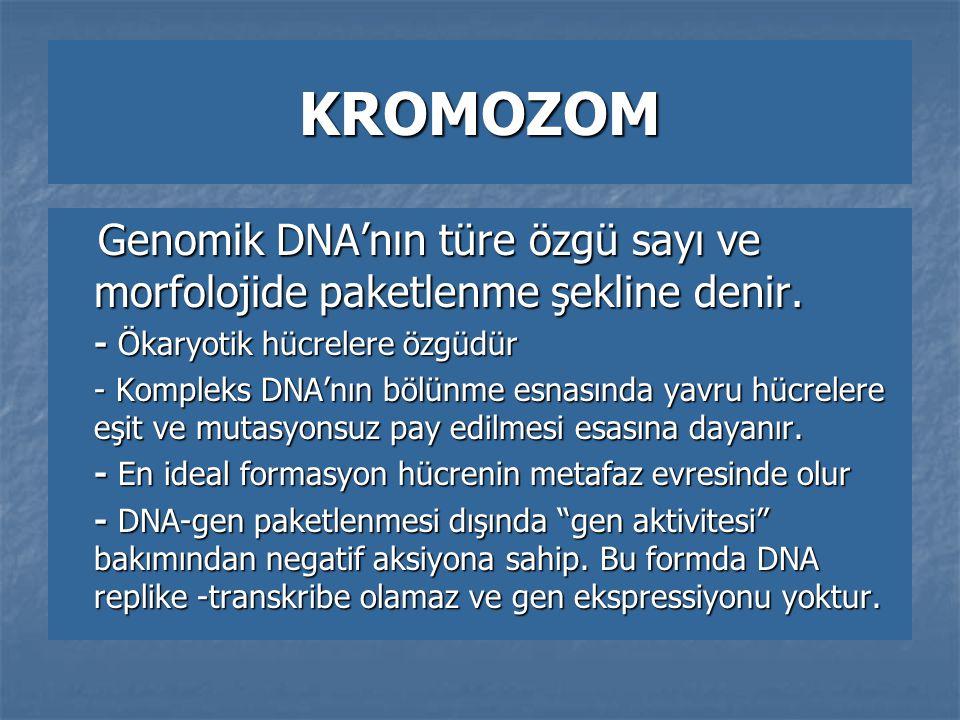 KROMOZOM Genomik DNA'nın türe özgü sayı ve morfolojide paketlenme şekline denir. - Ökaryotik hücrelere özgüdür.