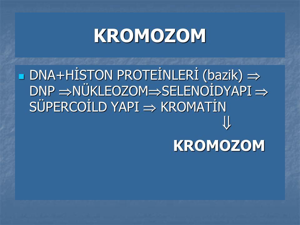 KROMOZOM DNA+HİSTON PROTEİNLERİ (bazik)  DNP NÜKLEOZOMSELENOİDYAPI  SÜPERCOİLD YAPI  KROMATİN 