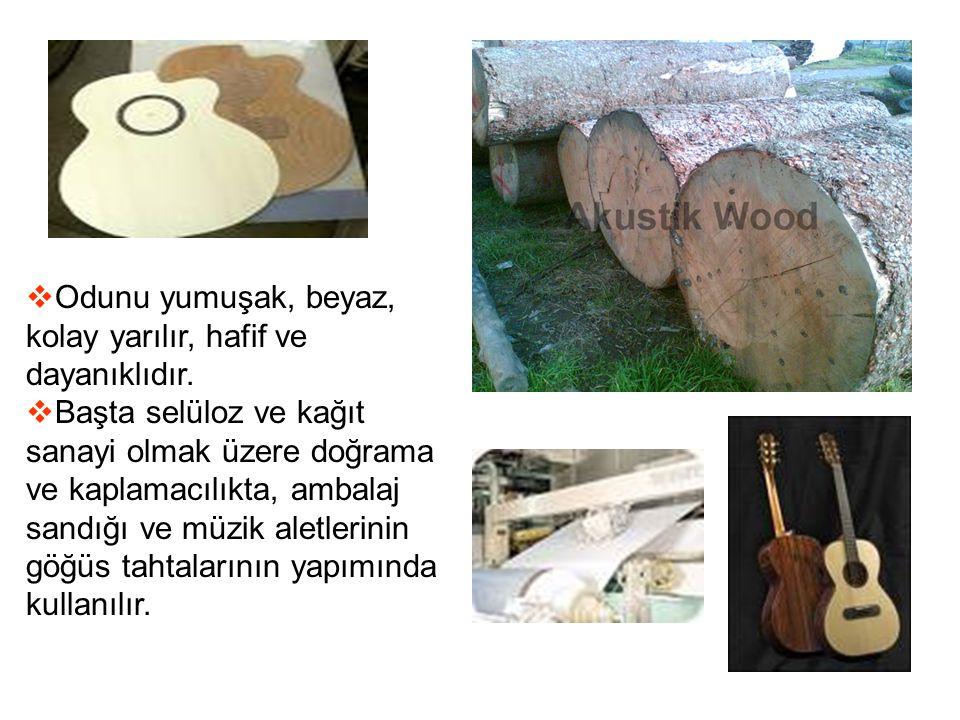 Odunu yumuşak, beyaz, kolay yarılır, hafif ve dayanıklıdır.