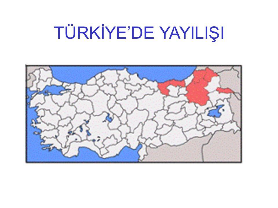 TÜRKİYE'DE YAYILIŞI