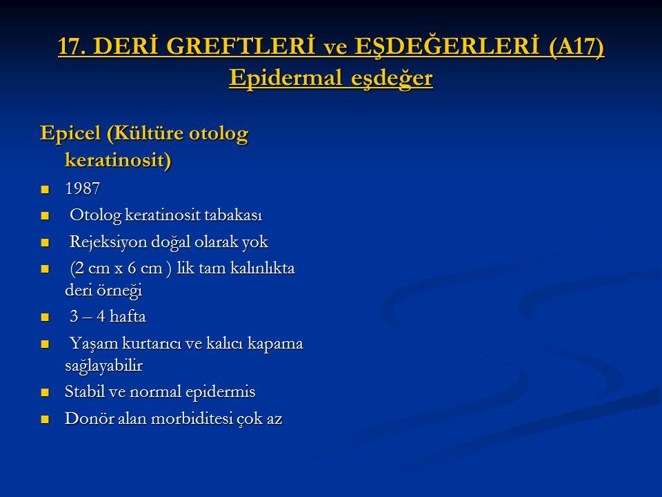 17. DERİ GREFTLERİ ve EŞDEĞERLERİ (A17) Epidermal eşdeğer