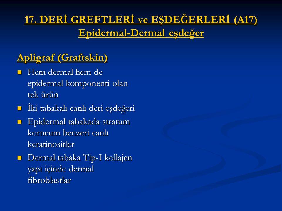 17. DERİ GREFTLERİ ve EŞDEĞERLERİ (A17) Epidermal-Dermal eşdeğer