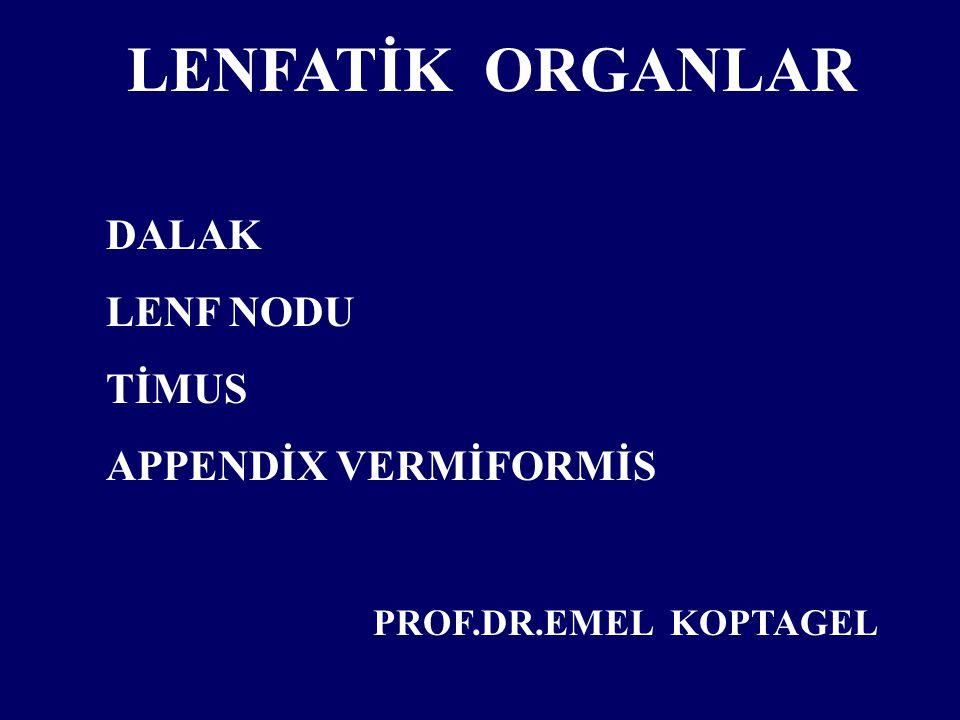 LENFATİK ORGANLAR DALAK LENF NODU TİMUS APPENDİX VERMİFORMİS