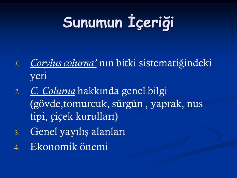 Sunumun İçeriği Corylus colurna' nın bitki sistematiğindeki yeri