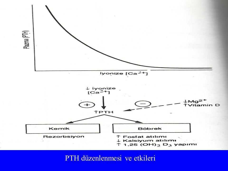 PTH düzenlenmesi ve etkileri