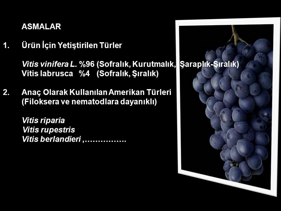 ASMALAR Ürün İçin Yetiştirilen Türler. Vitis vinifera L. %96 (Sofralık, Kurutmalık, Şaraplık-Şıralık)