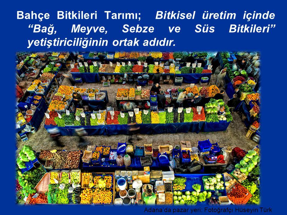 Bahçe Bitkileri Tarımı; Bitkisel üretim içinde Bağ, Meyve, Sebze ve Süs Bitkileri yetiştiriciliğinin ortak adıdır.