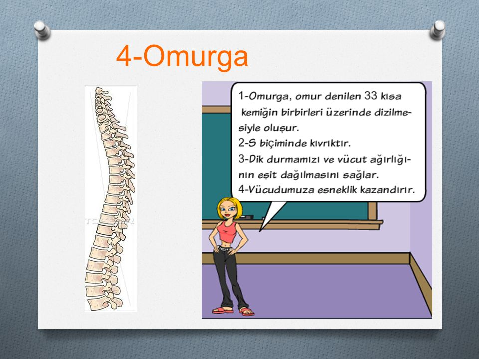 4-Omurga