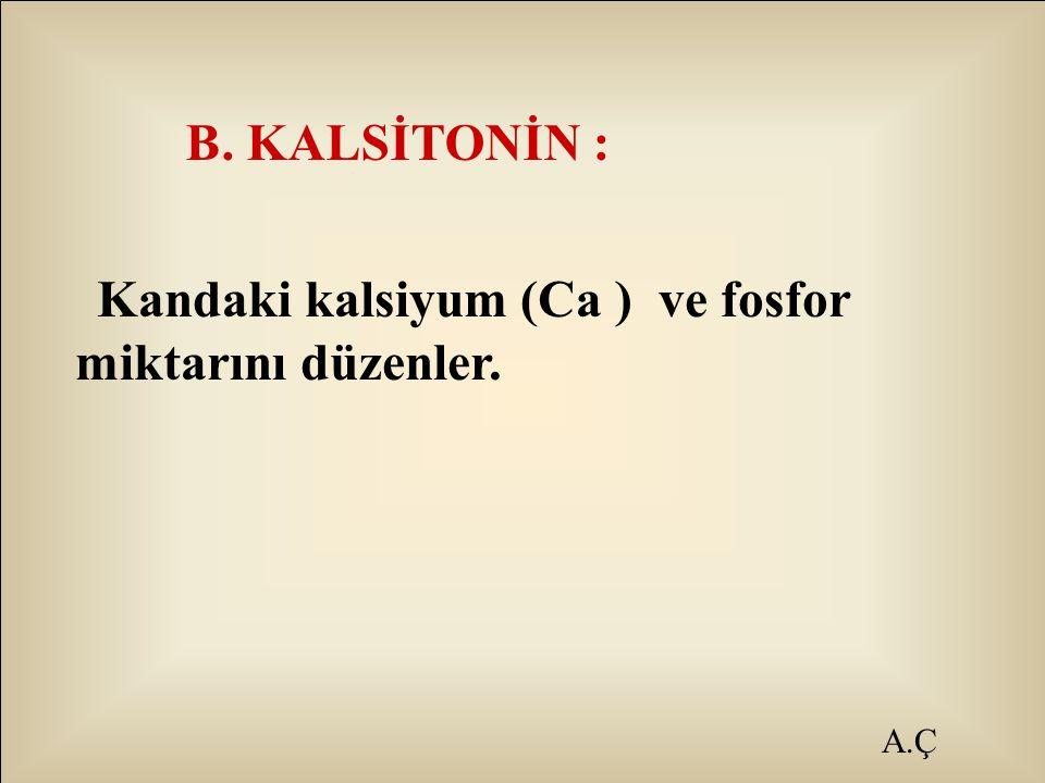 B. KALSİTONİN : Kandaki kalsiyum (Ca ) ve fosfor miktarını düzenler. A.Ç