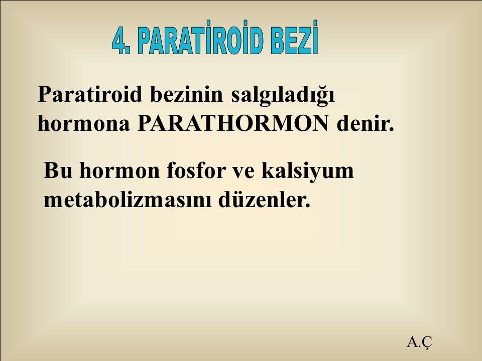Paratiroid bezinin salgıladığı hormona PARATHORMON denir.
