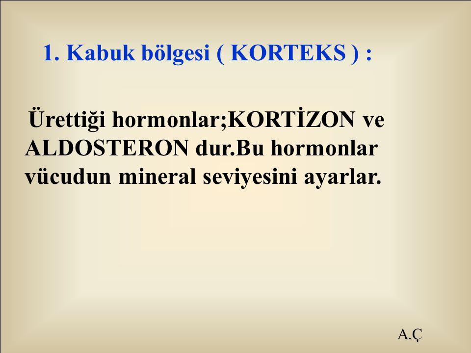 1. Kabuk bölgesi ( KORTEKS ) :