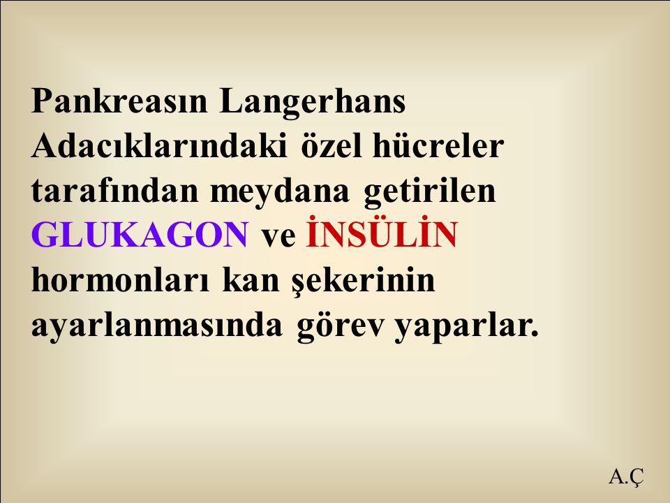 Pankreasın Langerhans Adacıklarındaki özel hücreler tarafından meydana getirilen GLUKAGON ve İNSÜLİN hormonları kan şekerinin ayarlanmasında görev yaparlar.