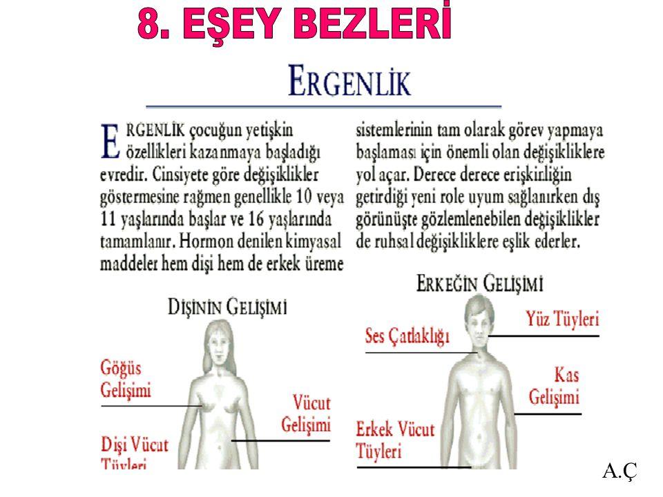 8. EŞEY BEZLERİ A.Ç