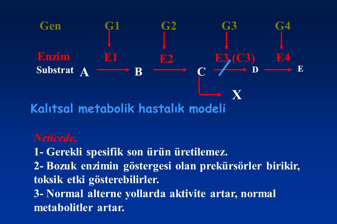 A X Gen Enzim B C G1 E2 G2 E3 (C3) G3 E1 E4 G4