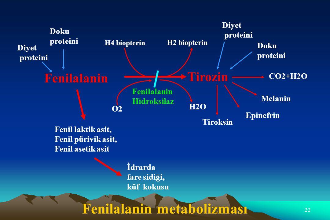 Fenilalanin metabolizması
