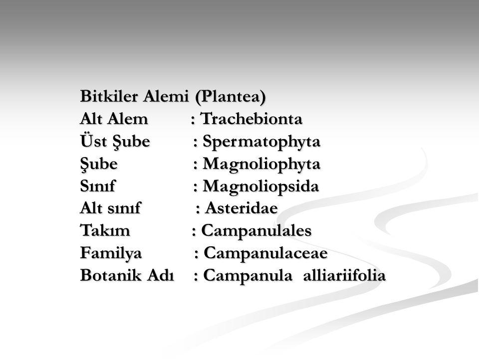 Bitkiler Alemi (Plantea)