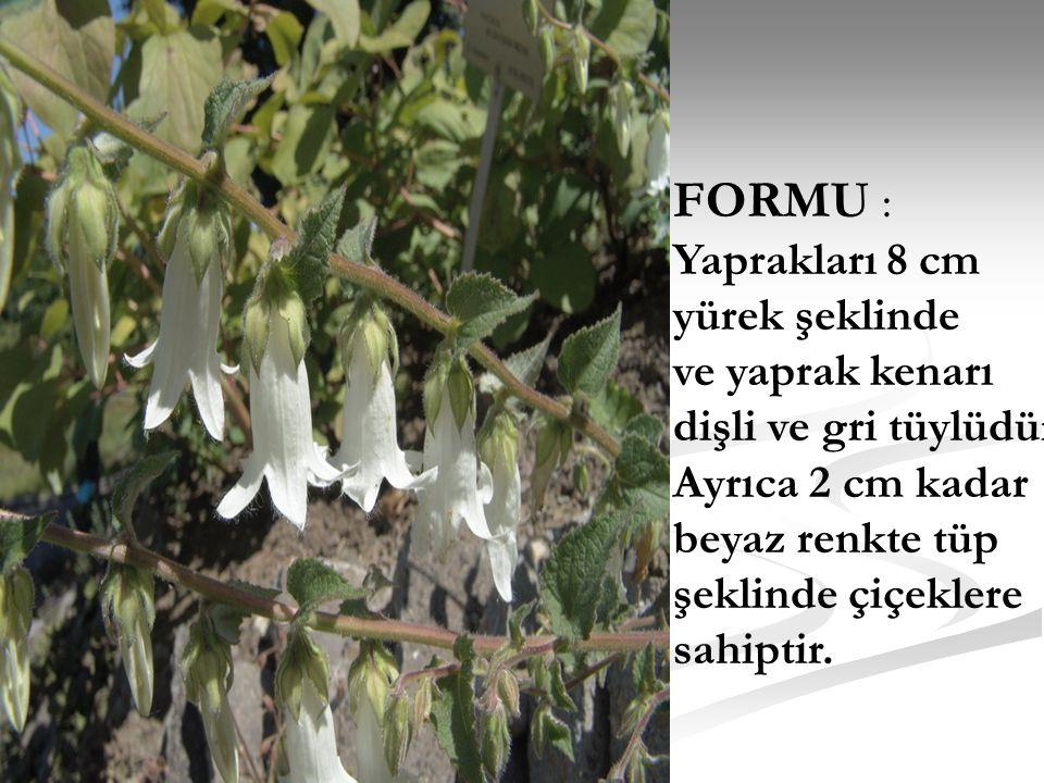 FORMU : Yaprakları 8 cm yürek şeklinde ve yaprak kenarı