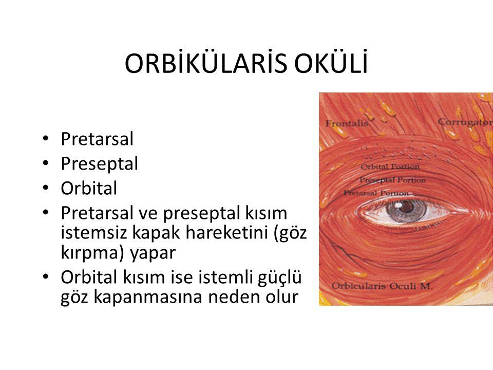 ORBİKÜLARİS OKÜLİ Pretarsal Preseptal Orbital