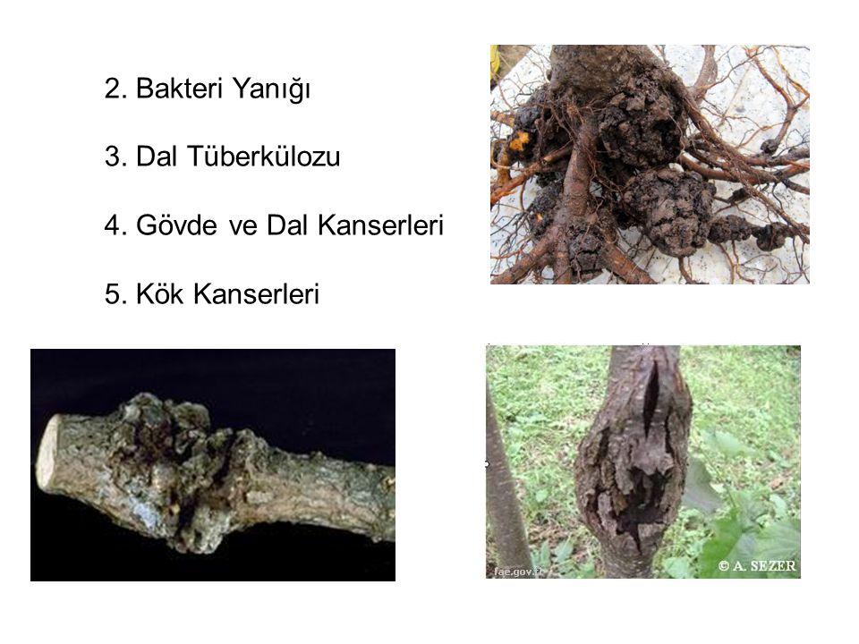 2. Bakteri Yanığı 3. Dal Tüberkülozu 4. Gövde ve Dal Kanserleri 5