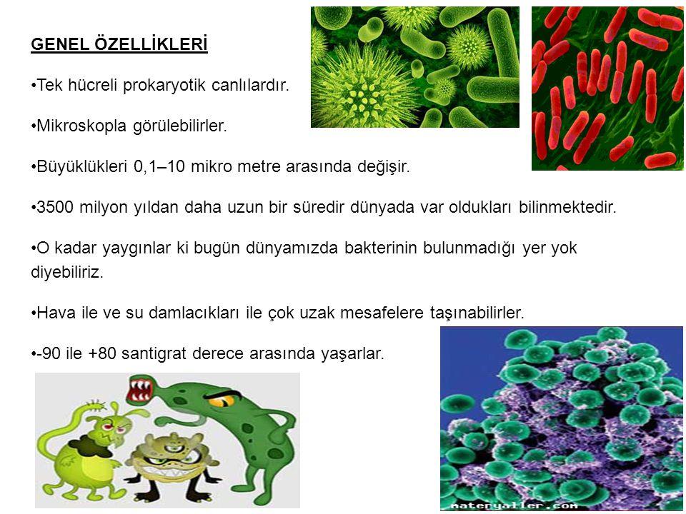 GENEL ÖZELLİKLERİ Tek hücreli prokaryotik canlılardır. Mikroskopla görülebilirler. Büyüklükleri 0,1–10 mikro metre arasında değişir.