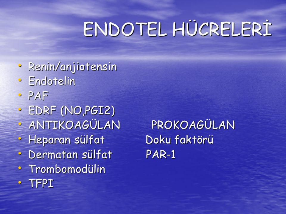 ENDOTEL HÜCRELERİ Renin/anjiotensin Endotelin PAF EDRF (NO,PGI2)