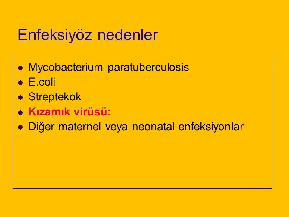 Enfeksiyöz nedenler Mycobacterium paratuberculosis E.coli Streptekok
